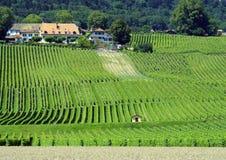 Αγρόκτημα Vinyard argicultural στην Ιταλία, άποψη από την οδική πλευρά Στοκ φωτογραφία με δικαίωμα ελεύθερης χρήσης