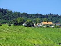 Αγρόκτημα Vinyard argicultural στην Ιταλία, άποψη από την οδική πλευρά Στοκ φωτογραφίες με δικαίωμα ελεύθερης χρήσης