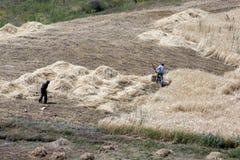 Αγρότες που κόβουν το σανό κοντά στην περιοχή της κιβωτού του Νώε κοντά στην πόλη Dogabeyazit στη μακριά ανατολικά Τουρκία στοκ εικόνες