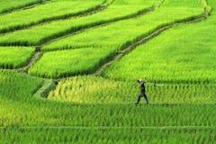 Αγρότες που περπατούν στον τομέα ρυζιού κορυφογραμμών Όμορφο τοπίο στο chiang Στοκ Εικόνες