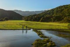Αγρότες που στέκονται στον τομέα ρυζιού ορυζώνα στοκ φωτογραφία