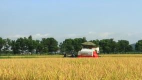 Αγρότες που συγκομίζουν το ρύζι στους τομείς από τη μηχανή φιλμ μικρού μήκους