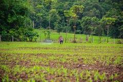 Αγρότες που ψεκάζουν το φυτοφάρμακο στοκ εικόνες με δικαίωμα ελεύθερης χρήσης