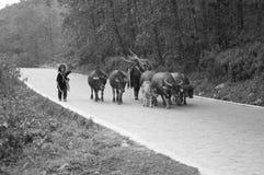 Αγρότες στην οδό με τα άγρια ζώα Στοκ φωτογραφία με δικαίωμα ελεύθερης χρήσης