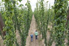 Αγρότες στη φυτεία λυκίσκου, εναέρια φωτογραφία στοκ φωτογραφία