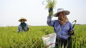 αγρότες Ταϊλανδός απόθεμα βίντεο