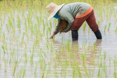 αγρότες Στοκ φωτογραφία με δικαίωμα ελεύθερης χρήσης