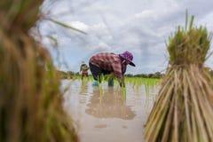 αγρότες Στοκ εικόνες με δικαίωμα ελεύθερης χρήσης