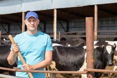 Αγρότης ατόμων που εργάζεται στο αγρόκτημα με τις γαλακτοκομικές αγελάδες Στοκ Εικόνες