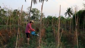 Αγρότης ατόμων που ποτίζει τη φυτική πλοκή και που φορά ένα καπέλο αχύ στοκ εικόνες