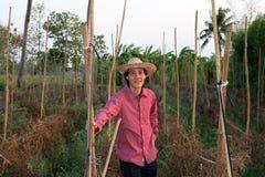 Αγρότης ατόμων που στέκεται μπροστά από τη φυτική πλοκή και που φορά έ στοκ εικόνα