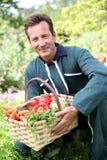 Αγρότης ατόμων που συλλέγει τα φρέσκα λαχανικά στοκ φωτογραφία
