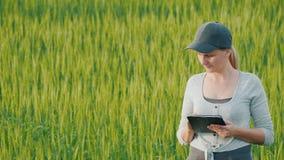 Αγρότης γυναικών με τις διαθέσιμες στάσεις χεριών ταμπλετών στον πράσινο τομέα σίτου απόθεμα βίντεο