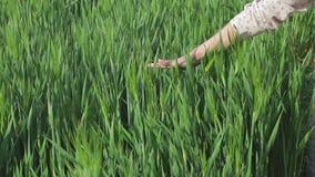 Αγρότης γυναικών που απολαμβάνει τη φύση και τον ήλιο απόθεμα βίντεο