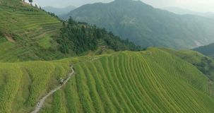Αγρότης που πηγαίνει κατά μήκος των Terraced τομέων ρυζιού Longji απόθεμα βίντεο
