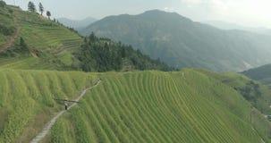 Αγρότης που πηγαίνει κατά μήκος των Terraced τομέων ρυζιού Longji φιλμ μικρού μήκους