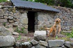 Αγρότης-σκυλί σε έναν διαχωρισμό των μεταλλικών ενώσεων Στοκ Εικόνες