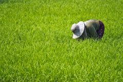 αγρότης Ταϊλάνδη Στοκ Εικόνα