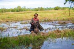 Αγρότης Ταϊλανδός τρόπου ζωής οι ταϊλανδικοί αγρότες είναι παγίδα ψαριών στους τομείς ορυζώνα Στοκ Εικόνες