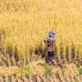 αγρότης Ταϊλανδός Στοκ Εικόνα