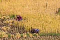 αγρότης Ταϊλανδός Στοκ Φωτογραφία