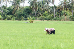 αγρότης Ταϊλανδός Στοκ φωτογραφία με δικαίωμα ελεύθερης χρήσης