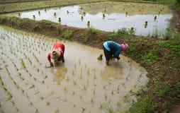 αγρότης Ταϊλανδός Στοκ εικόνα με δικαίωμα ελεύθερης χρήσης