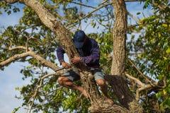 Αγρότης τρόπου ζωής οι αγρότες αναρριχούνται στα δέντρα Στοκ φωτογραφία με δικαίωμα ελεύθερης χρήσης