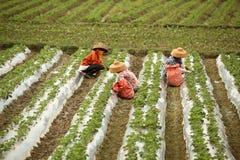 αγρότης Στοκ Εικόνα