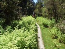 Αγυρτεία στη διαδρομή Copland στη δυτική ακτή της Νέας Ζηλανδίας στοκ εικόνα