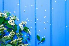 αγωμένος μήλο χρόνοσφαγωμένος σειράς Στοκ φωτογραφίες με δικαίωμα ελεύθερης χρήσης