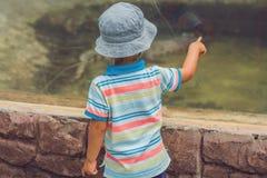 Αγόρια που προσέχουν τα ερπετά στο terrarium στοκ εικόνα