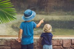 Αγόρια που προσέχουν τα ερπετά στο terrarium στοκ φωτογραφίες
