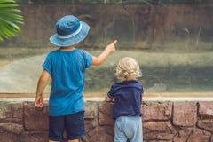 Αγόρια που προσέχουν τα ερπετά στο terrarium στοκ εικόνες