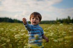 Αγόρι 2 έτη σε έναν τομέα Στοκ Εικόνα
