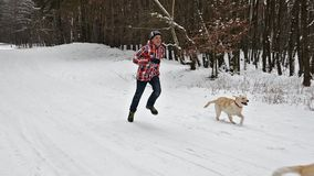 Αγόρι εφήβων που τρέχει με τα σκυλιά του σε έναν χειμερινό δασικό δρόμο απόθεμα βίντεο
