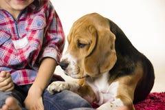 Αγόρι με ένα λαγωνικό σκυλιών Στοκ Εικόνες