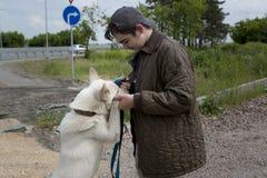 Αγόρι με ένα σκυλί στοκ φωτογραφία με δικαίωμα ελεύθερης χρήσης