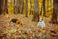 Αγόρι με το λαγωνικό Στοκ Εικόνες