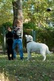 Αγόρι με poodle και ένα Λαμπραντόρ Στοκ φωτογραφία με δικαίωμα ελεύθερης χρήσης