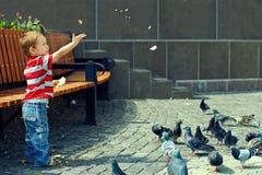 αγόρι πουλιών μωρών που ταΐζει λίγη τετραγωνική πόλη στοκ φωτογραφία με δικαίωμα ελεύθερης χρήσης