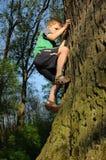 αγόρι που αναρριχείται στις νεολαίες δέντρων Στοκ εικόνα με δικαίωμα ελεύθερης χρήσης
