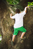 Αγόρι που αναρριχείται στο δέντρο στοκ εικόνες