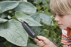 Αγόρι που εξετάζει το φύλλο μέσω της ενίσχυσης - γυαλί Στοκ Εικόνα