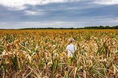 Αγόρι που στέκεται στον ξηρό τομέα καλαμποκιού στη Δανία στοκ εικόνες