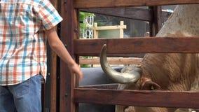 Αγόρι σχετικά με το κέρατο βοοειδών απόθεμα βίντεο
