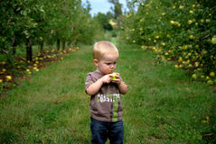 αγόρι orchcard Στοκ φωτογραφία με δικαίωμα ελεύθερης χρήσης