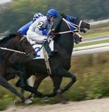 Αγώνας αλόγων για τις βαλανιδιές βραβείων Στοκ φωτογραφίες με δικαίωμα ελεύθερης χρήσης