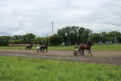 Αγώνας εποχής κατάρτισης Novosibirsk 2017 των αλόγων Trotter στον περιφερειακό πρωτοπόρο διαδρομής αγώνων στοκ φωτογραφία με δικαίωμα ελεύθερης χρήσης