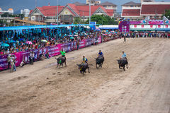 Αγώνας Buffalo φεστιβάλ Στοκ Φωτογραφία